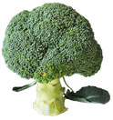 65 g 49 g 33 g 16 g Brocoli Winter cauliflower Brocoli القرنبيطالا خضرا