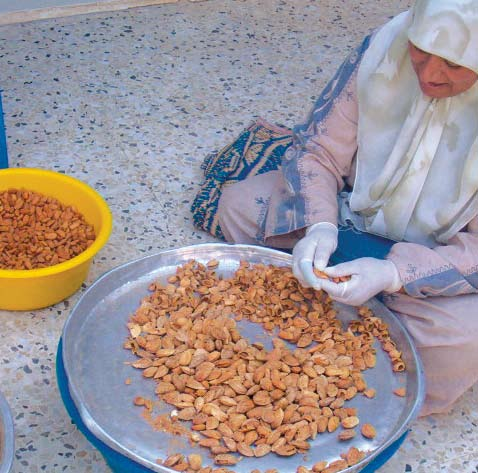 Almonds (Om Al-Fahem) The Fair Trade Department markets the finest kind of almonds- Om Al- Fahem- which has been vastly promoted among farmers in Jenin area in the West Bank when the department