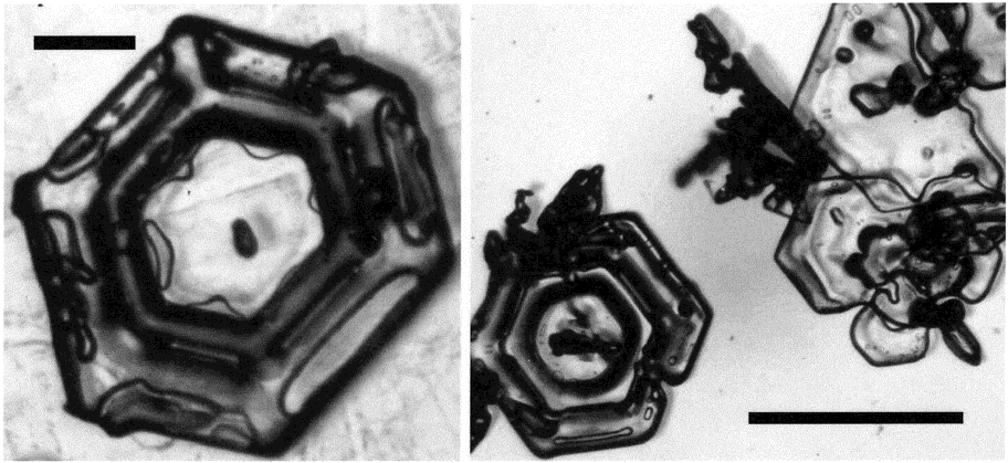 FIGURE 3. Optical microscopy pictures of ice crystals from sample 2. Scale bars: left: 200 µm, right: 1 mm. FIGURE 4. Scanning electron microscopy pictures of ice crystals from sample 2.