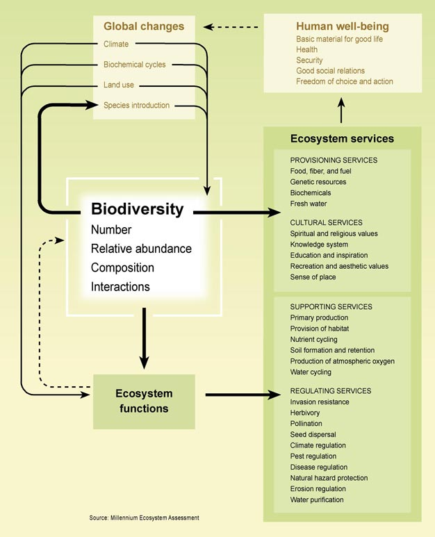 page 42/90 Annex 15: Figure 1.4. Biodiversity, Ecosystem Functioning, and Ecosystem Services (C11 [see Annex 4, p. 33].Figure 11.