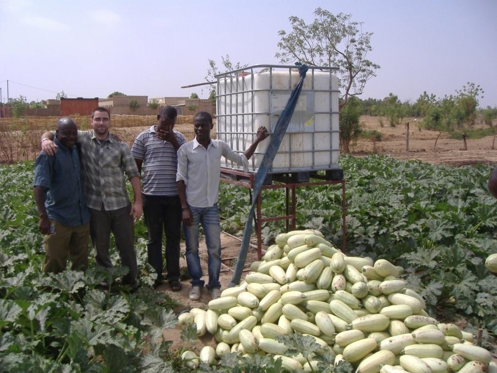 04/02/2013 ide Centre of Technology West frica Improving Production & Productivity Courgette/Zucchini 4000 3500 Rendement (kg/500 m² 3000 2500 2000 Goutte à goutte rrosage manuel 1500 1000 500 0
