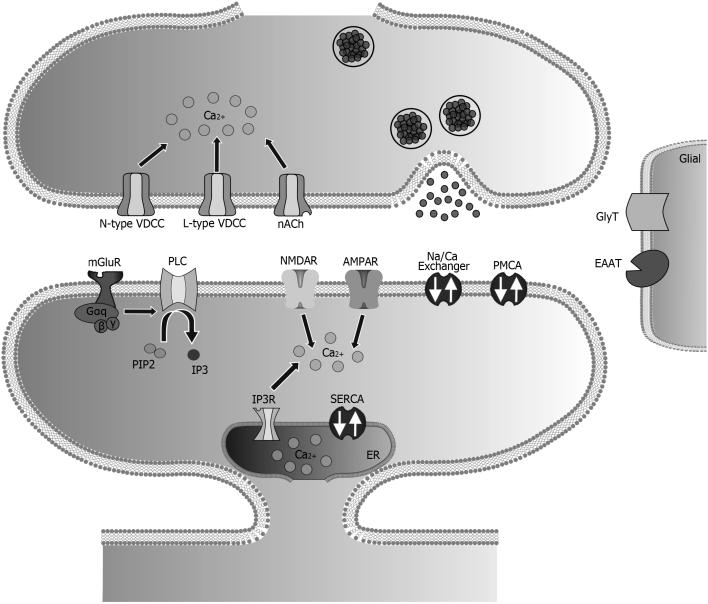 Sarmis et al. Comparison of numerical resolution... Figure 4. Schematic representation of RHENOMS glutamatergic synapse simulation platform. Figure 5.