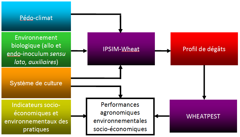 la qualité prédictive d IPSIM-Wheat-Eyespot (525 sites-années, 9 années ; Efficience=0.64 ; biais=6.