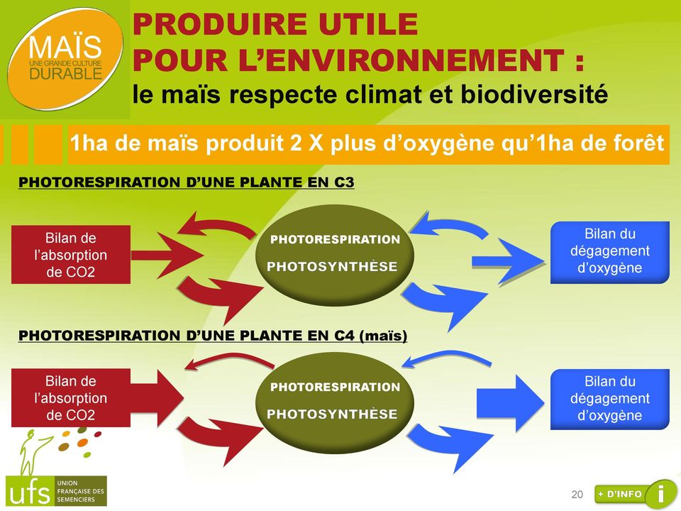 absorption de CO2 PHOTORESPIRATION Bilan du dégagement d oxygène PHOTORESPIRATION D UNE