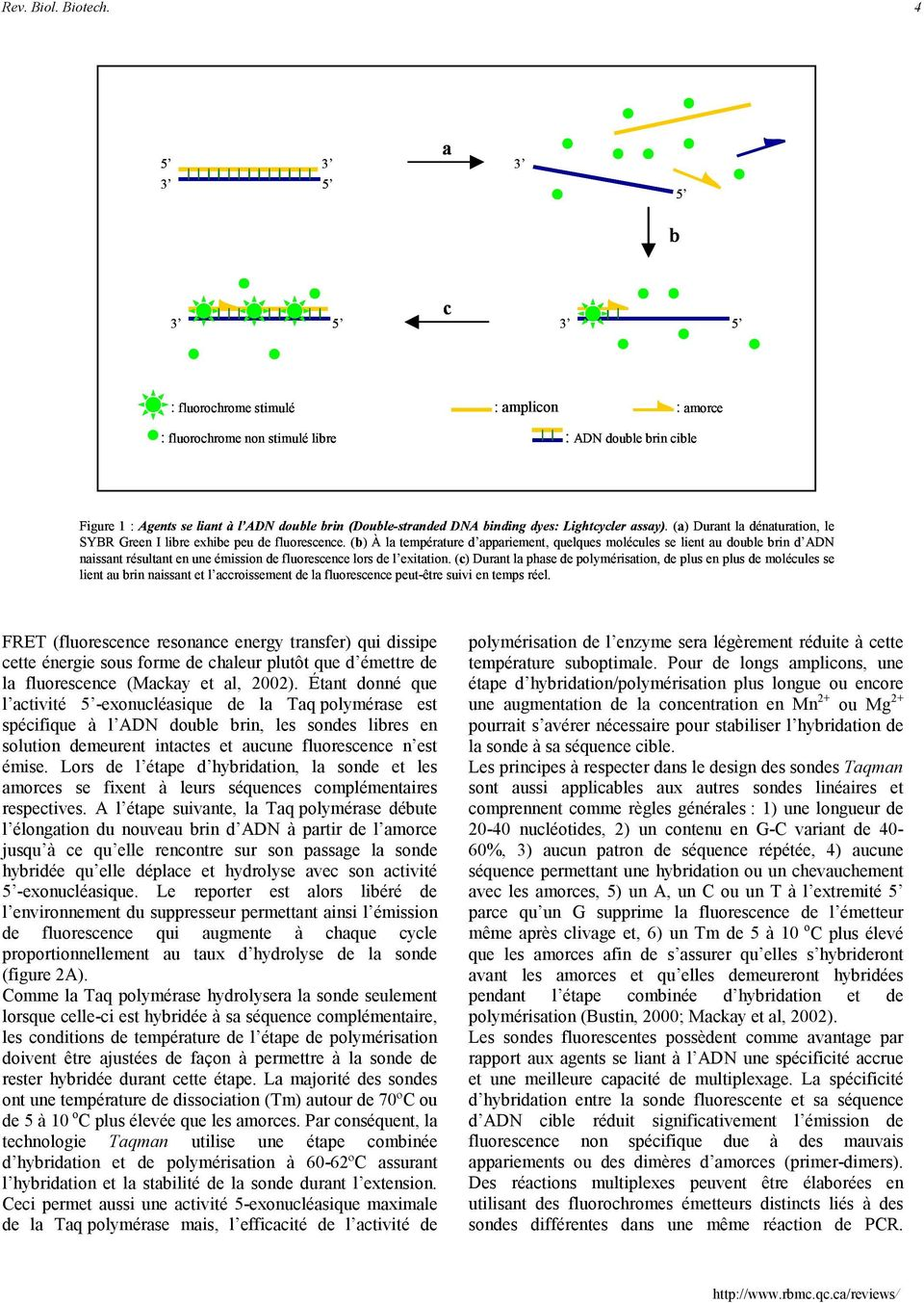 Lightcycler assay). (a) Durant la dénaturation, le SYBR Green I libre exhibe peu de fluorescence.