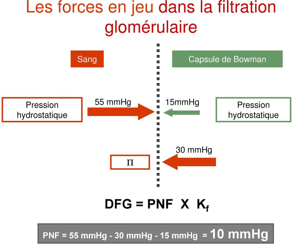 mmhg 15mmHg Pression hydrostatique 30 mmhg DFG =