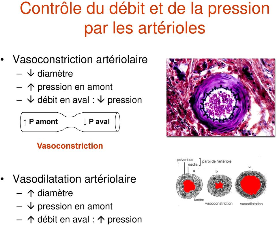 débit en aval : pression P amont P aval Vasoconstriction