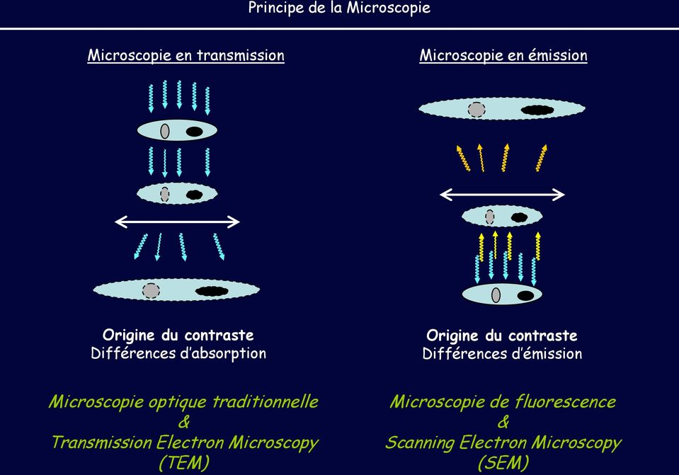 Différences d émission Microscopie optique traditionnelle & Transmission