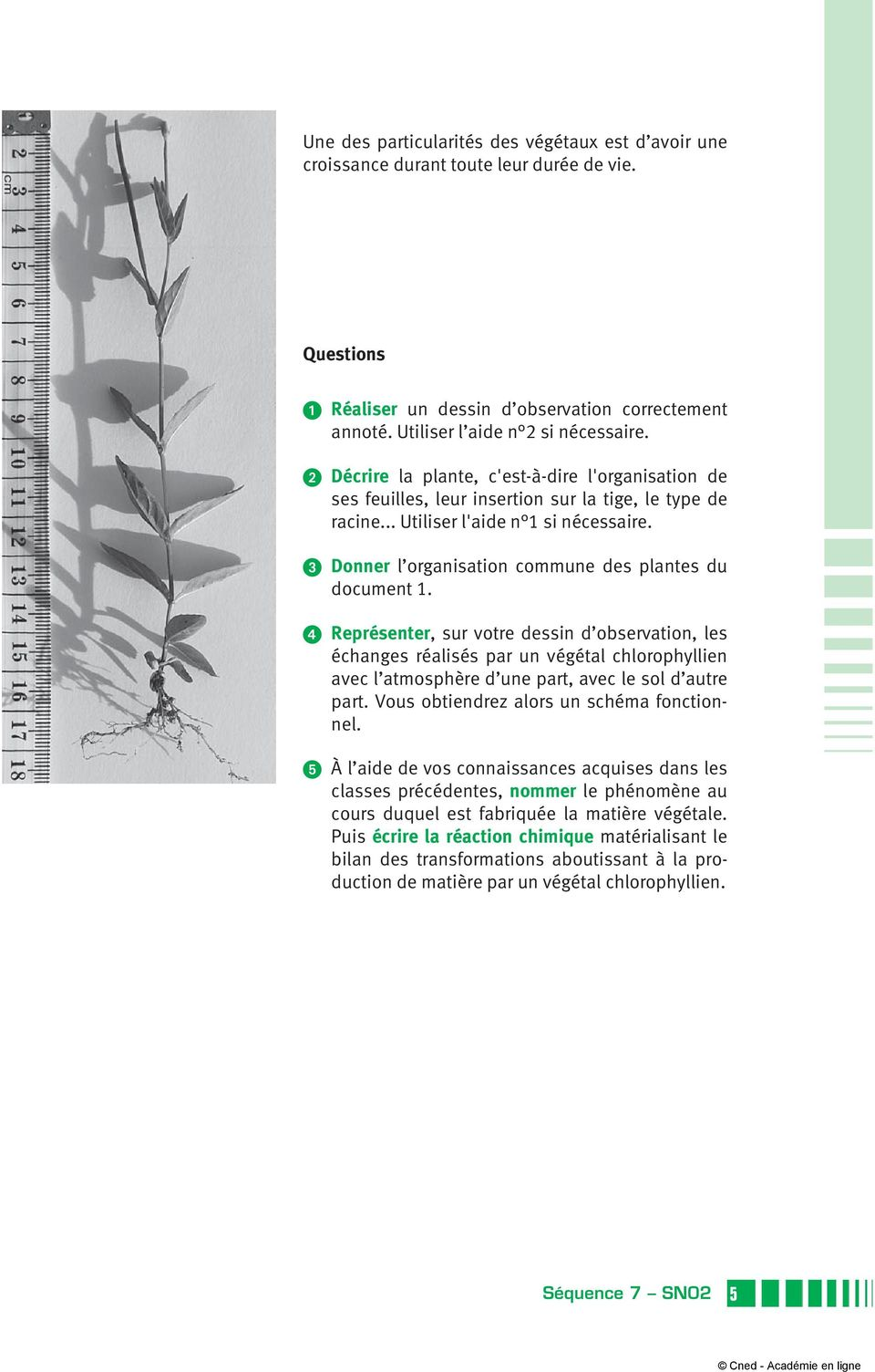 Donner l organisation commune des plantes du document 1.