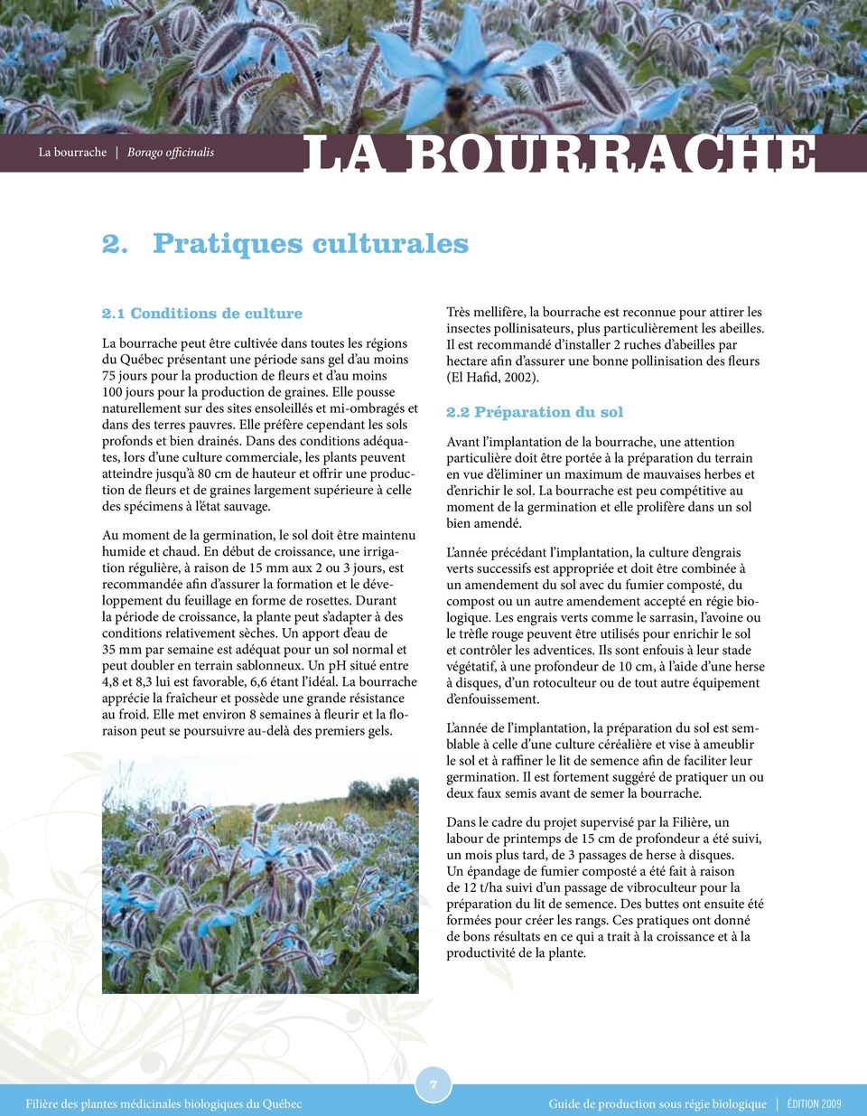 la bourrache borago officinalis pdf. Black Bedroom Furniture Sets. Home Design Ideas