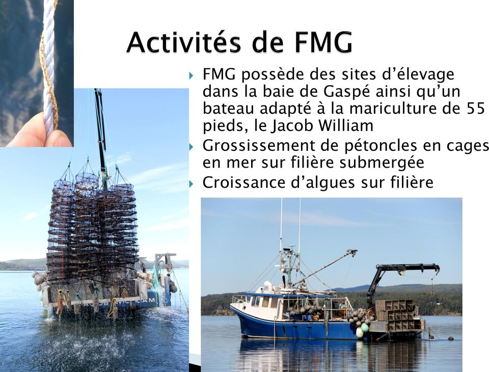 le Jacob William Grossissement de pétoncles en cages en