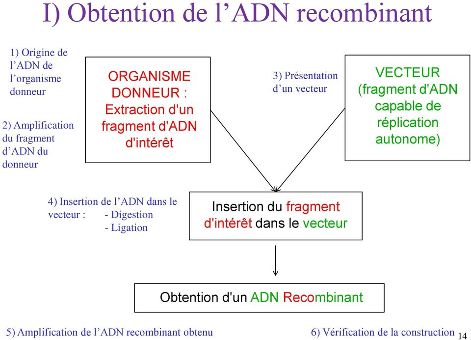 de réplication autonome) 4) Insertion de l ADN dans le vecteur : - Digestion - Ligation Insertion du fragment d'intérêt