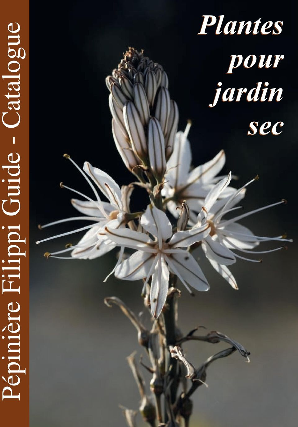 P pini re filippi guide catalogue plantes pour jardin for Catalogue plantes jardin