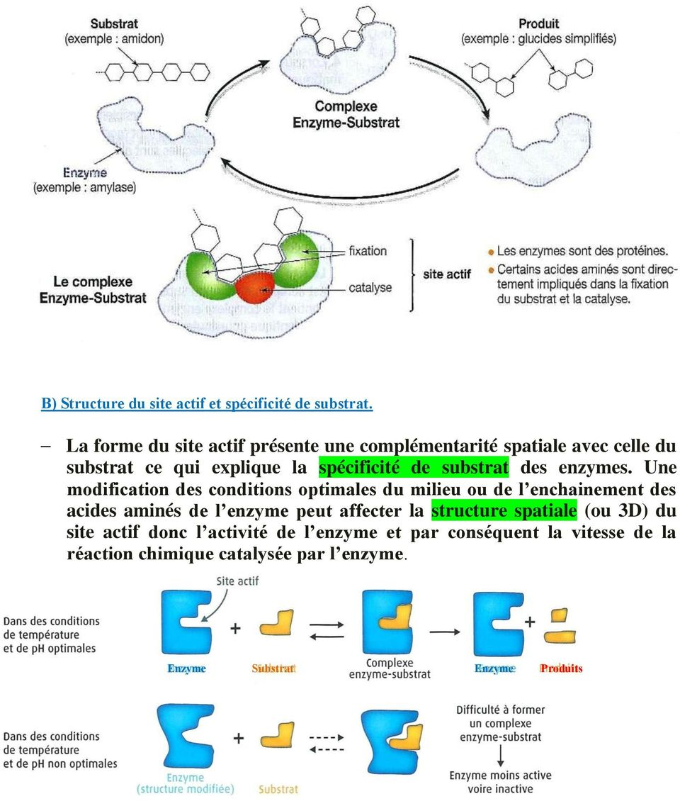 substrat des enzymes.