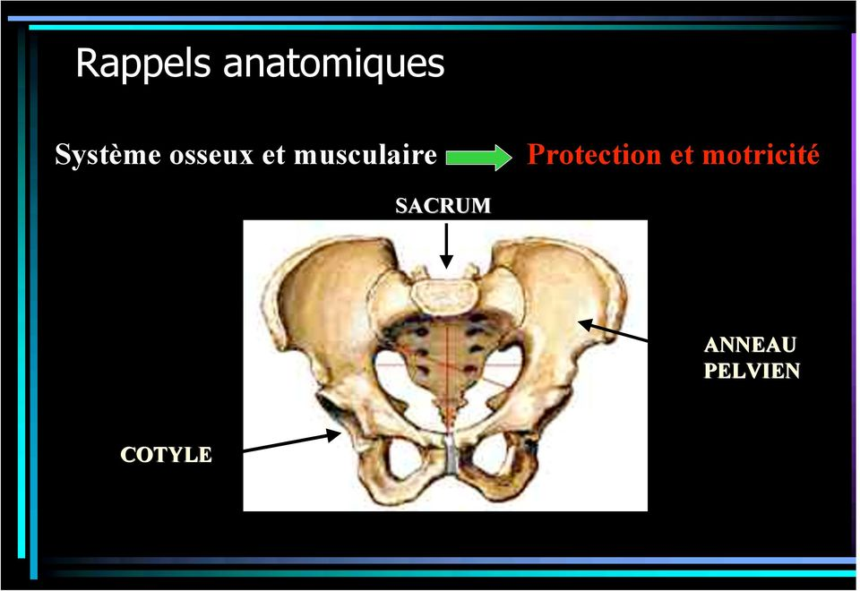 musculaire Protection et
