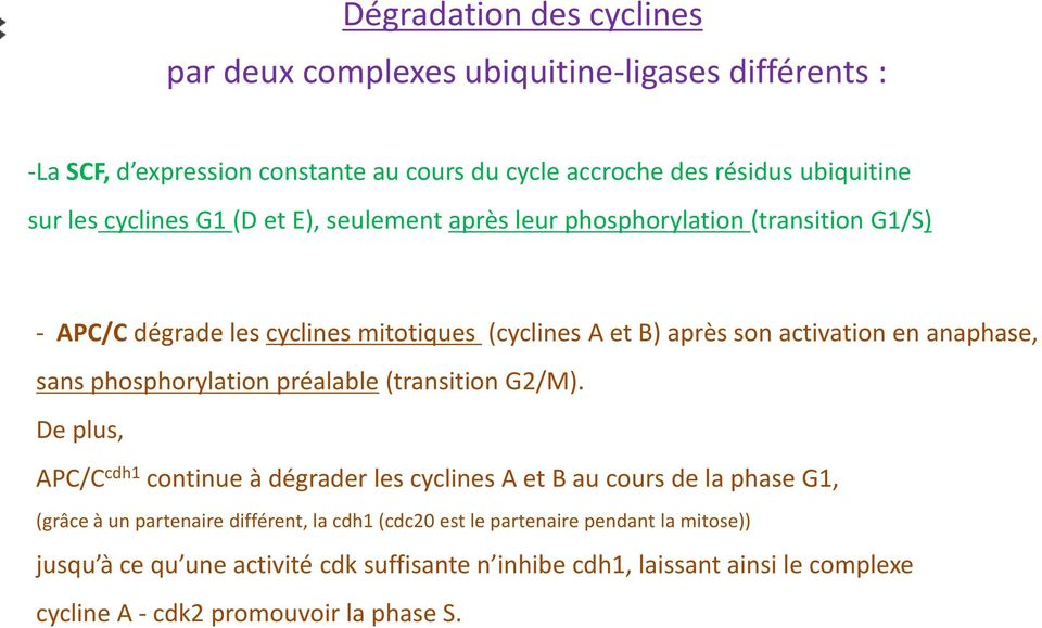 sans phosphorylation préalable (transition G2/M).
