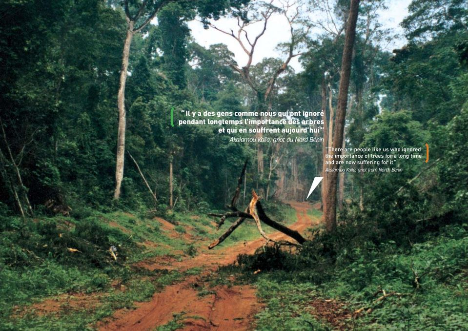"Bénin "" There are people like us who ignored the importance of trees for a"