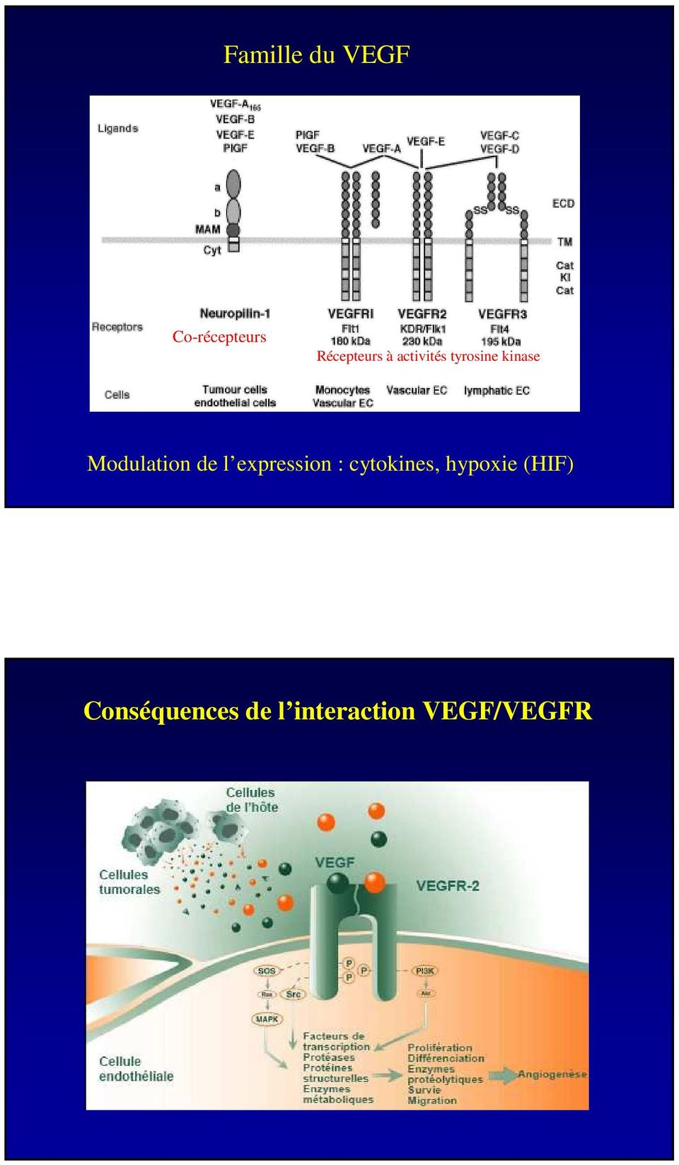 de l expression : cytokines, hypoxie