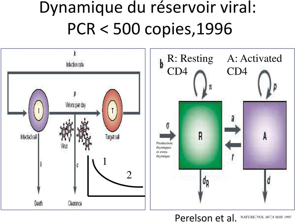 Activated CD4 1 2 Production: