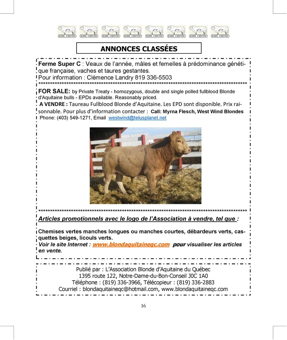 polled fullblood Blonde d'aquitaine bulls - EPDs available. Reasonably priced. A VENDRE : Taureau Fullblood Blonde d Aquitaine. Les EPD sont disponible. Prix raisonnable.