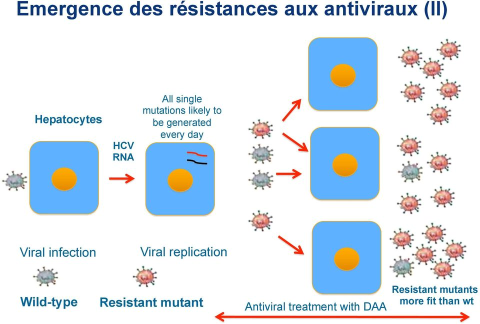 replication Wild-type Resistant mutant Antiviral treatment with DAA