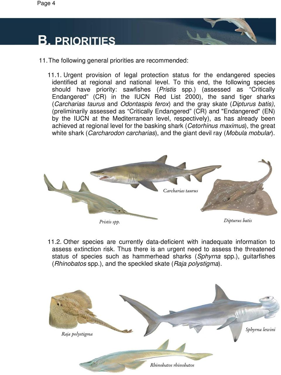 ) (assessed as Critically Endangered (CR) in the IUCN Red List 2000), the sand tiger sharks (Carcharias taurus and Odontaspis ferox) and the gray skate (Dipturus batis), (preliminarily assessed as