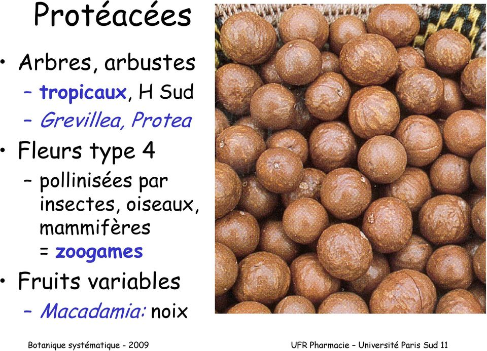 mammifères = zoogames Fruits variables Macadamia: noix