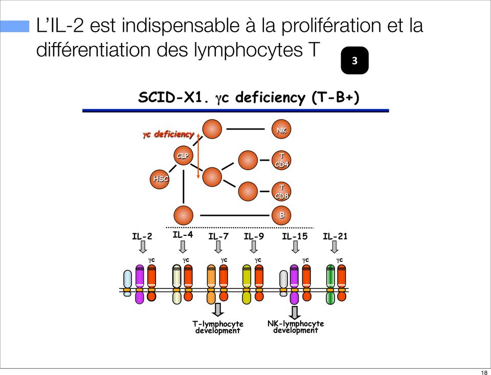 γc deficiency (T-B+) γc deficiency NK HSC CLP T CD4 T CD8 IL-2