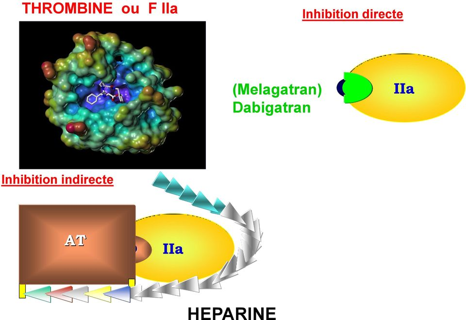 IIa Inhibition indirecte AT IIa
