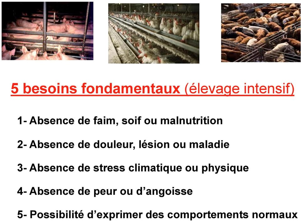 3- Absence de stress climatique ou physique 4- Absence de peur