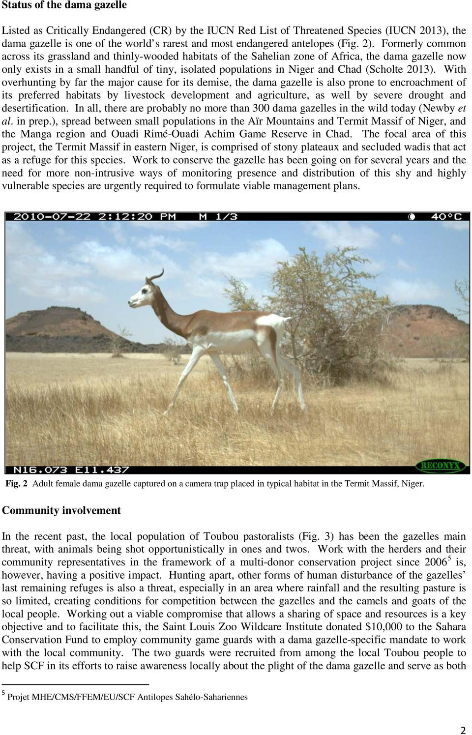 Formerly common across its grassland and thinly-wooded habitats of the Sahelian zone of Africa, the dama gazelle now only exists in a small handful of tiny, isolated populations in Niger and Chad