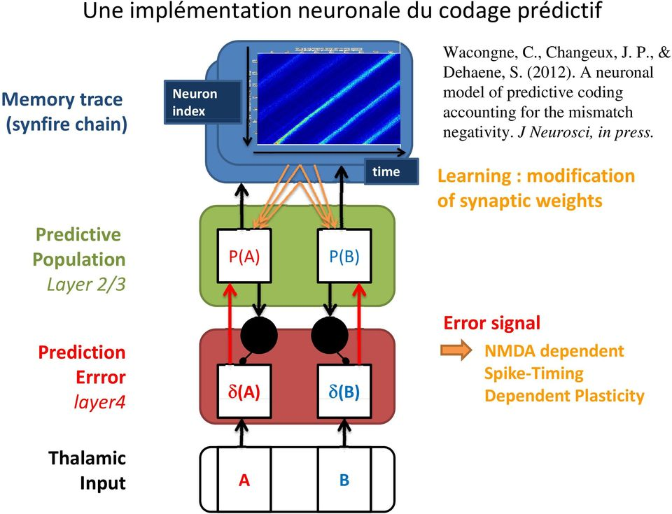 A neuronal model of predictive coding accounting for the mismatch negativity. J Neurosci, in press.
