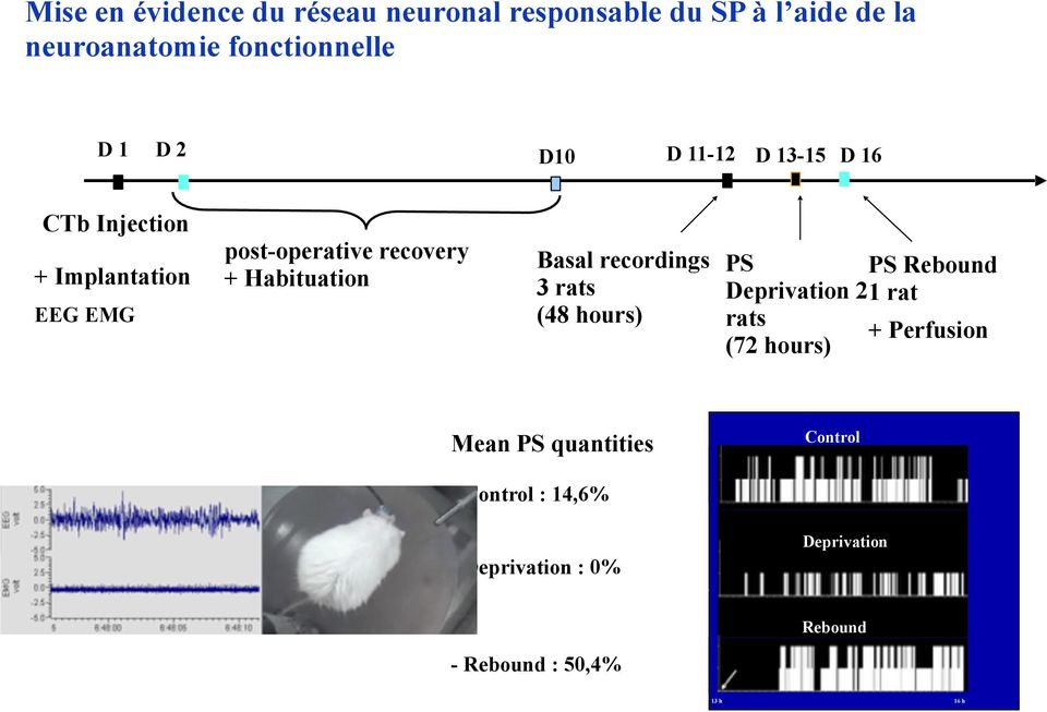 recordings 3 rats (48 hours) PS PS Rebound Deprivation 21 rat rats + Perfusion (72 hours) Mean PS quantities