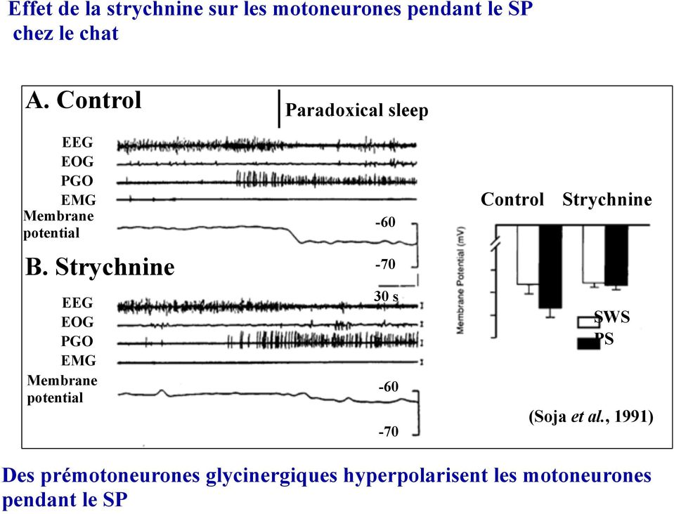 Strychnine EEG EOG PGO EMG Membrane potential Paradoxical sleep -60-70 30 s -60-70