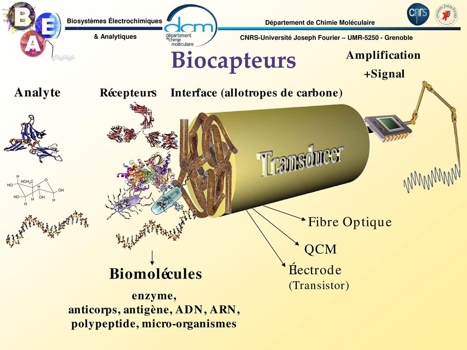 de carbone) Amplification +ignal 2 C Fibre ptique Biomolécules enzyme,