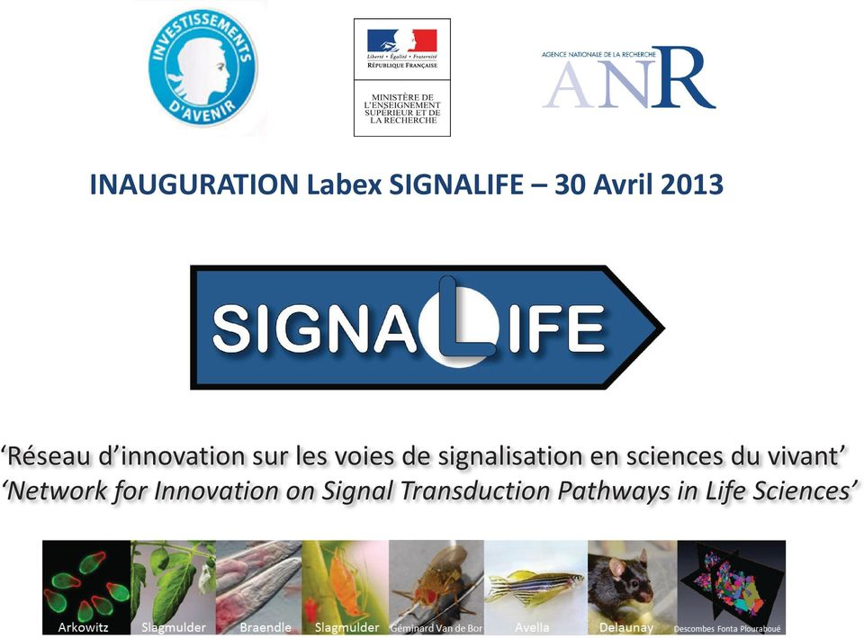 signalisation en sciences du vivant Network