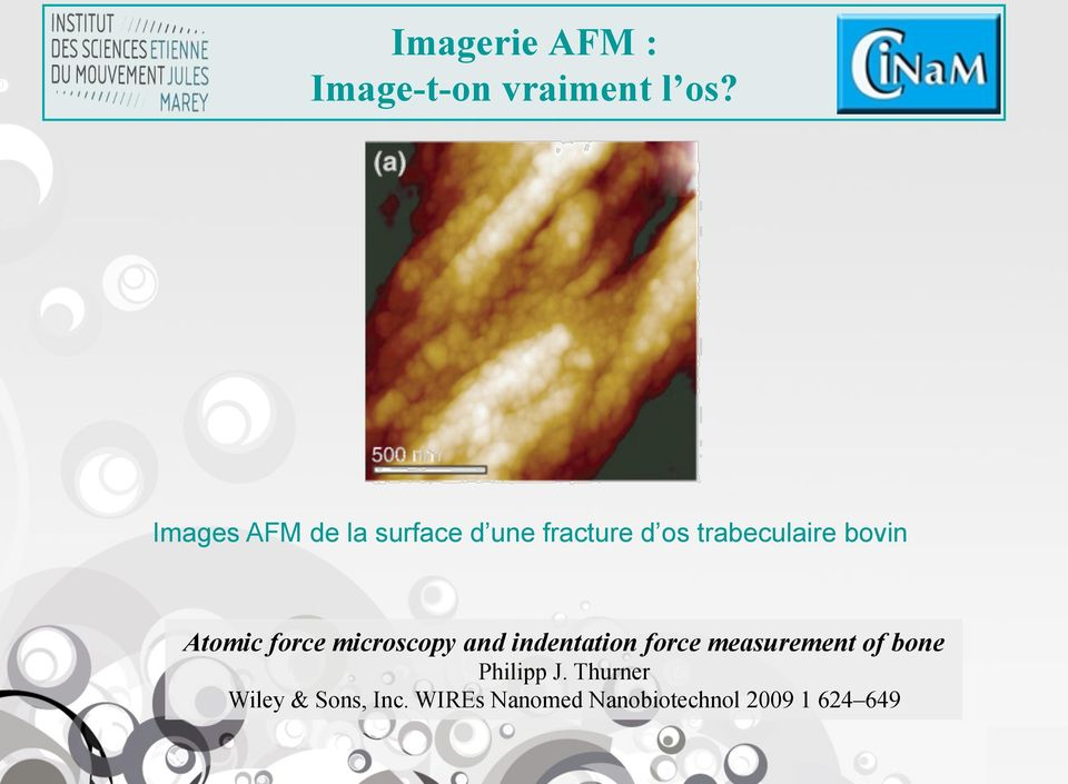 bovin Atomic force microscopy and indentation force