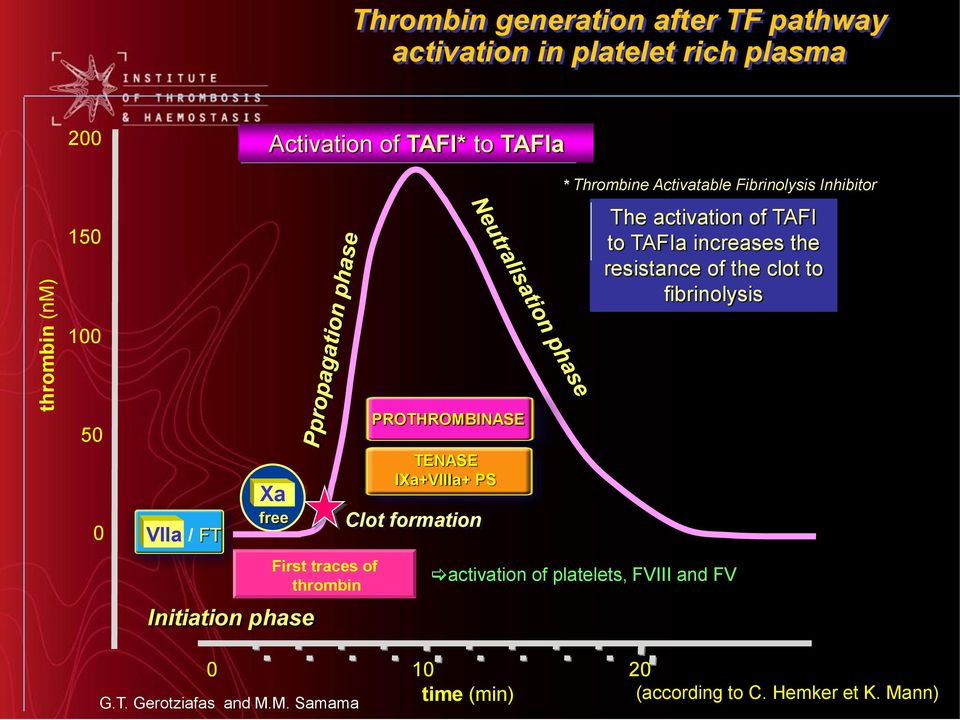 fibrinolysis 100 50 0 VIIa / FT Xa free Initiation phase First traces of thrombin PROTHROMBINASE TENASE IXa+VIIIa+ PS Clot