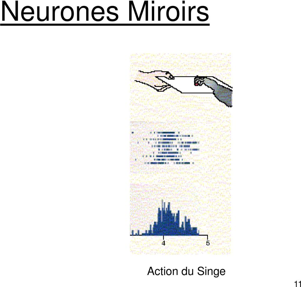 Les neurones miroirs 1 pdf for Neurones miroir