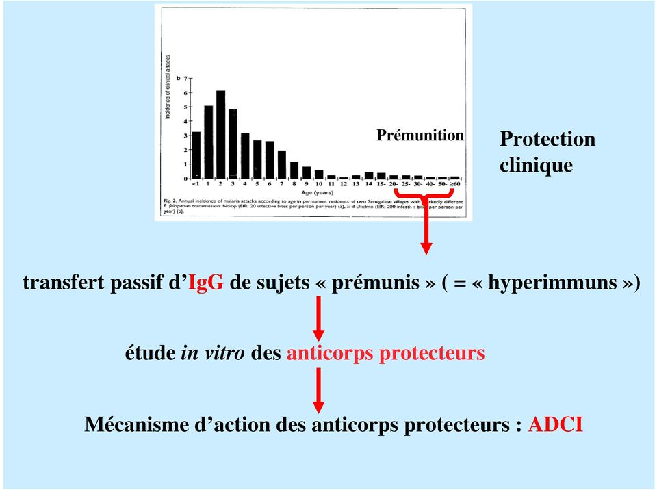 «hyperimmuns») étude in vitro des anticorps
