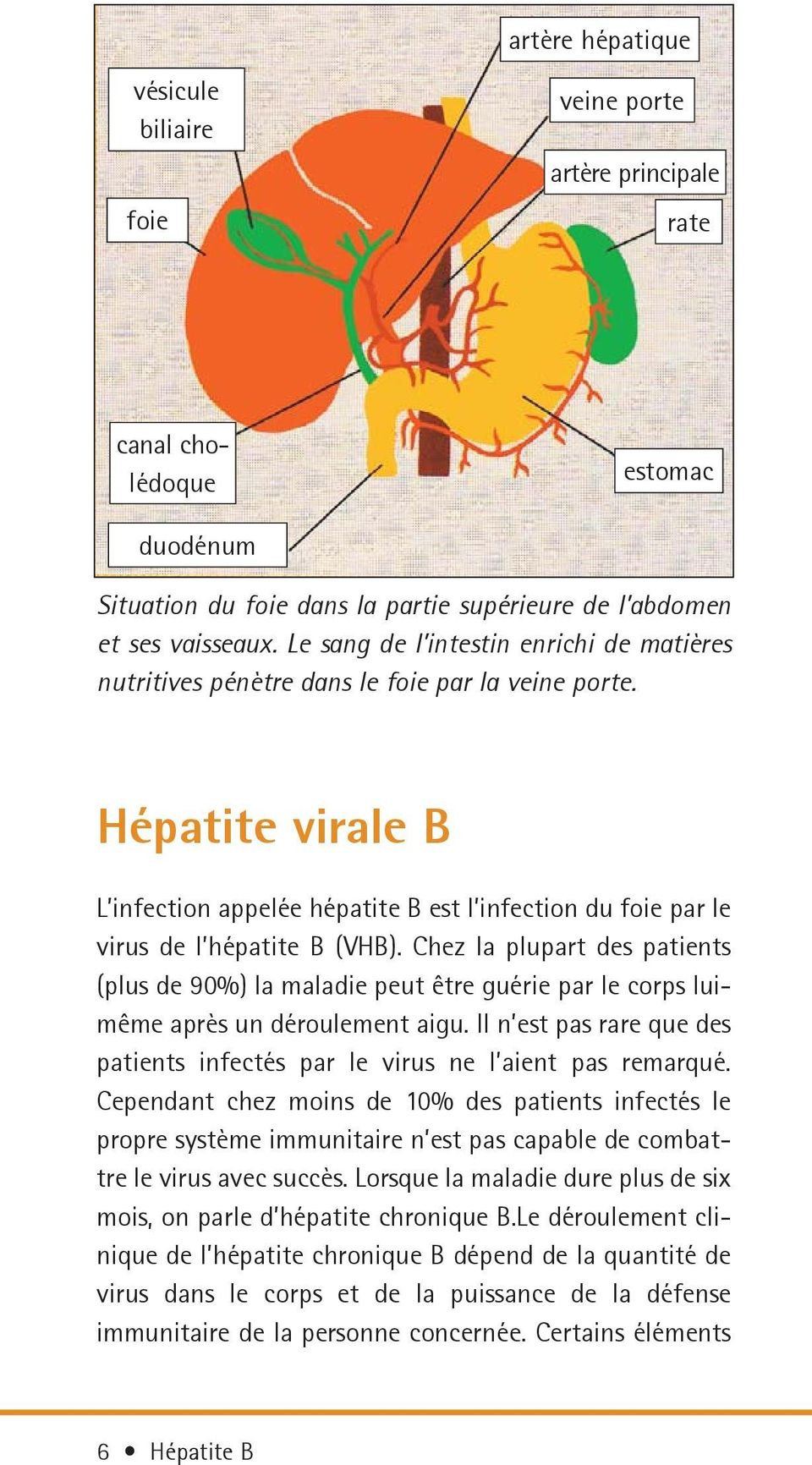 Hépatite virale B L infection appelée hépatite B est l infection du foie par le virus de l hépatite B (VHB).