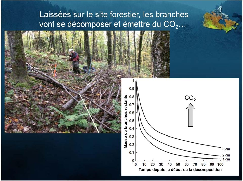 du CO 2 Masse de branches restante CO