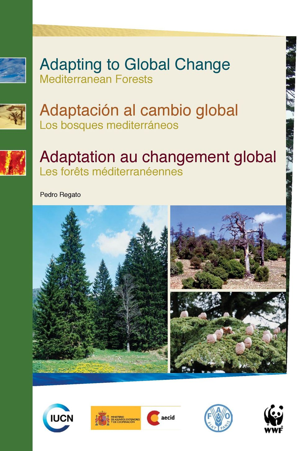bosques mediterráneos Adaptation au