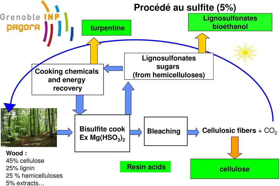 hemicelluloses) Bisulfite cook Ex Mg(HSO 3 ) 2 Bleaching Cellulosic