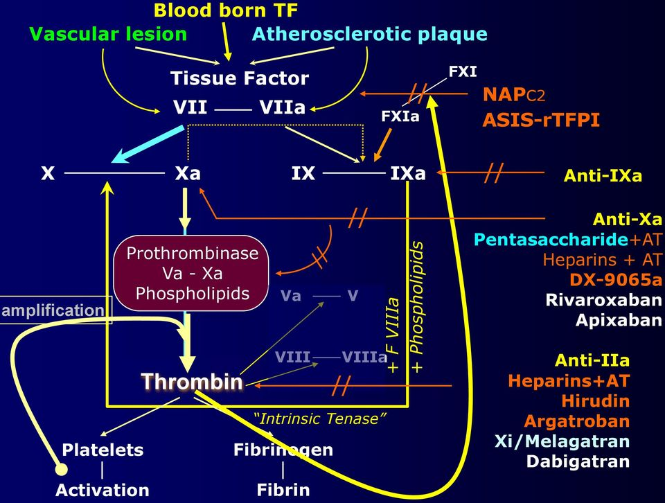 VIII Intrinsic Tenase Fibrinogen Fibrin V VIIIa // // Anti-Xa Pentasaccharide+AT Heparins + AT + F VIIIa +