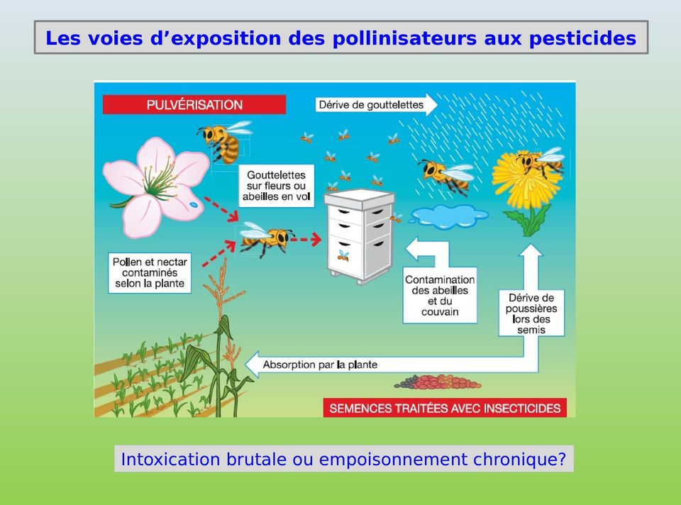 pesticides Intoxication