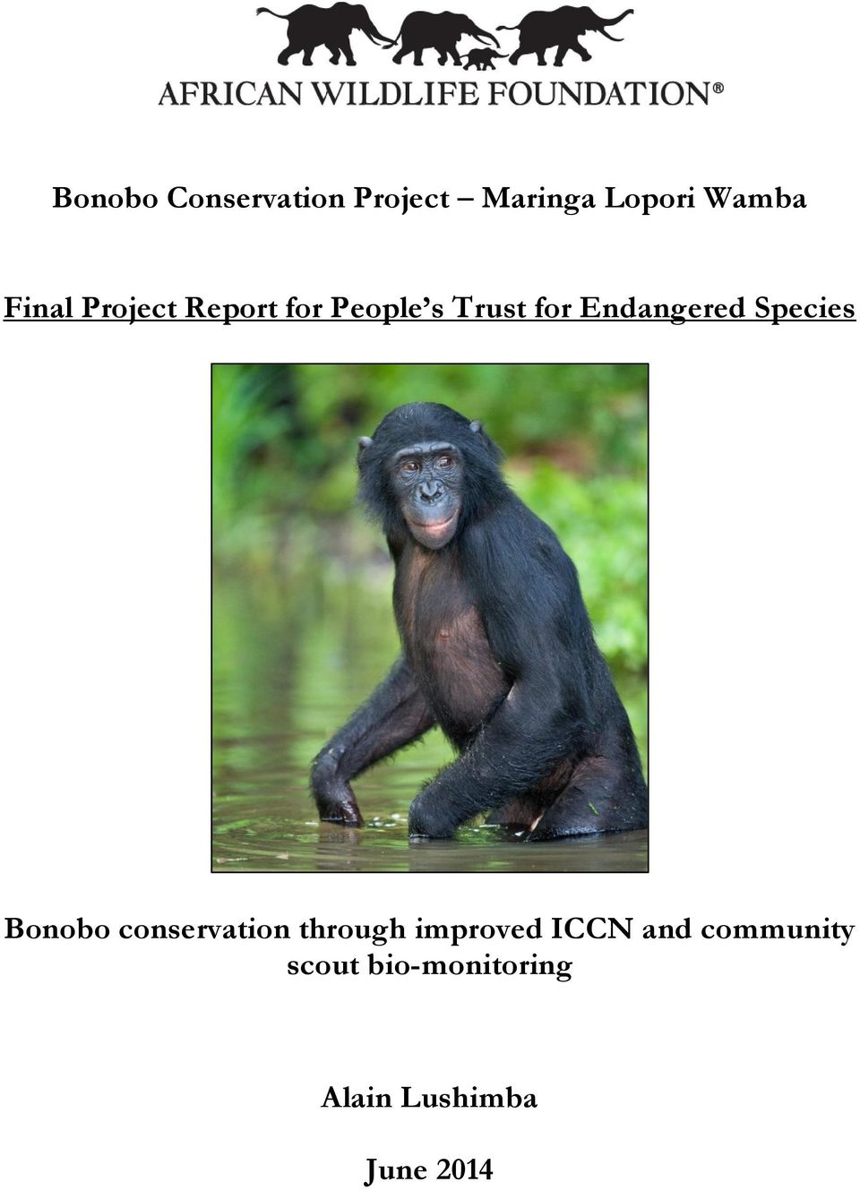 Endangered Species Bonobo conservation through