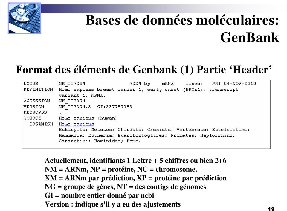 chromosome, XM = ARNm par prédiction, XP = protéine par prédiction NG = groupe de gènes, NT =