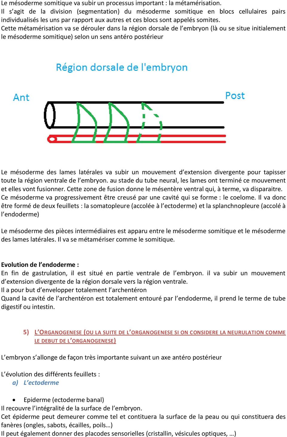 embryologie du tube digestif pdf
