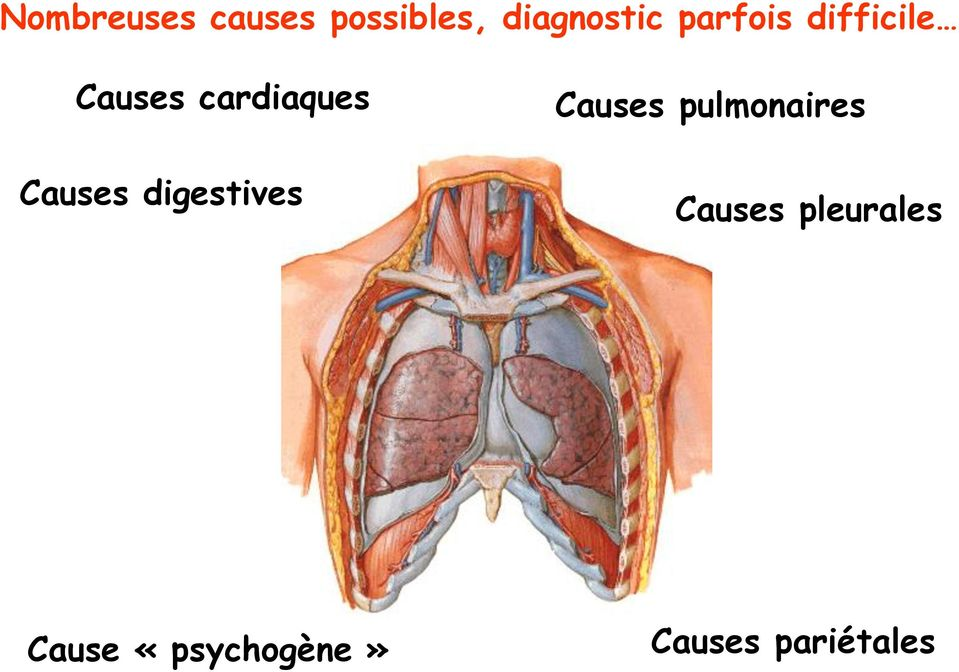 Causes digestives Causes pulmonaires